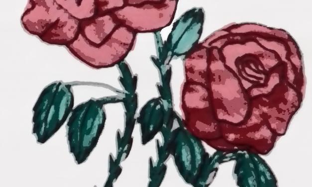 Rosas en el Parque